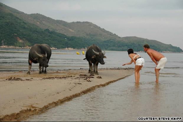 Tourists-meet-Mui-Wos-water-buffalos.-Photo-by-Steven-Knipp-INLINE