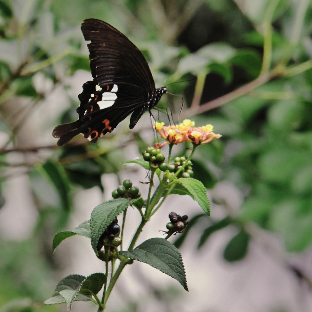 Butterfly at Datanla Falls. Image (c) 2014 Stacy Libokmeto