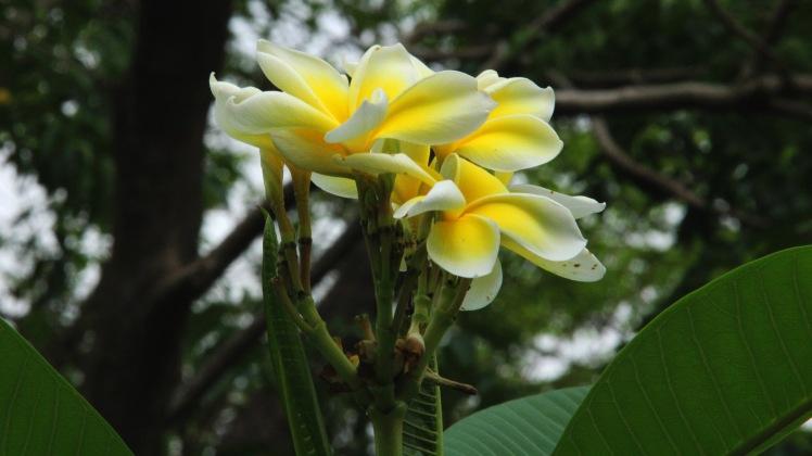 flowerphnomsampeau copy